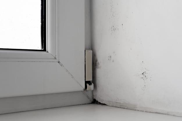 Mold corner window white wall